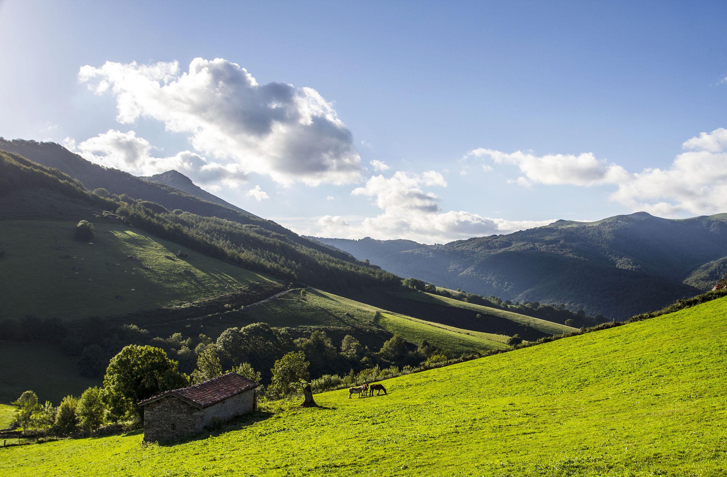 verde-paisaje